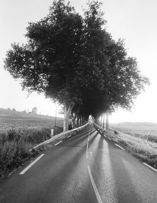www.thomasronchetti.net roady-trees
